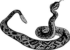clip art snakes