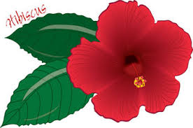 red hawaiian flower