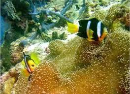 colorful freshwater aquarium fish