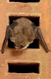 bat homes