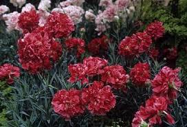 floris malmaison