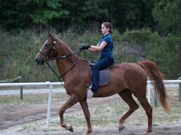 saddlebred training