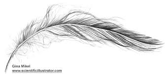 feather pencil