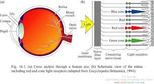 cone eye