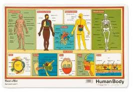 parts of the human body for kids