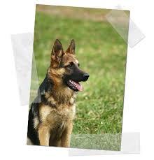 pastor aleman perros