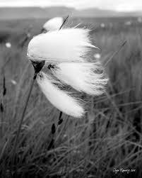 Gió ... ... Nguoc_chieu_gio