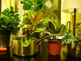 indoors plants