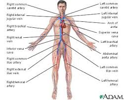 circulation systems