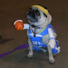 boxer dog costumes