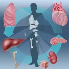 donation of organs