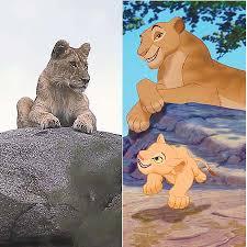 disney lions