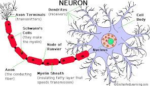 neurons pictures