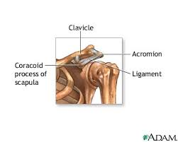 ligaments of the shoulder joint