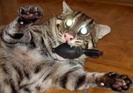 bob cat