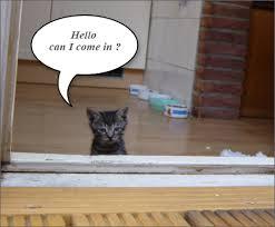 kitten talking
