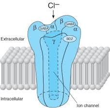 chloride ion channel