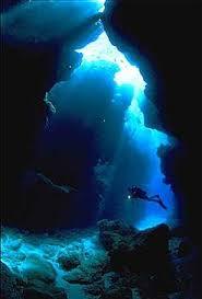 new zealand diving
