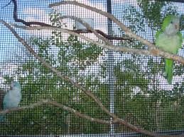 parrot aviaries