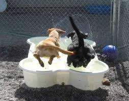 dogs swimming pool