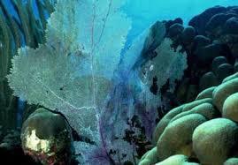 marine biomes plants