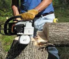 felling tree