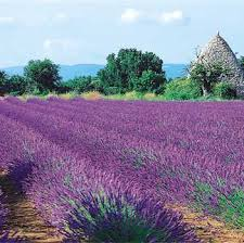 provencal french