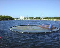 aquaculture cages