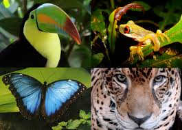 plants and animals in the tropical rainforest