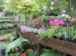 plant for garden