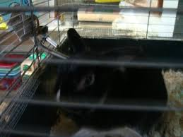 pet store rabbits