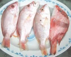 eat live fish
