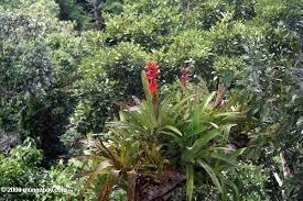 flowers of the amazon rainforest