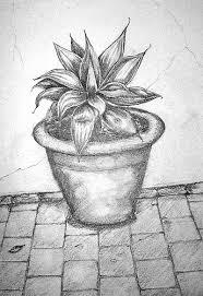 drawing plant