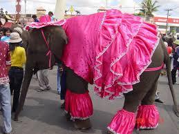 elephant clothes