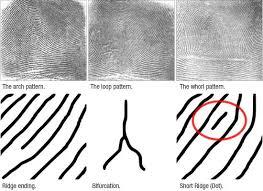 fingerprint forensics