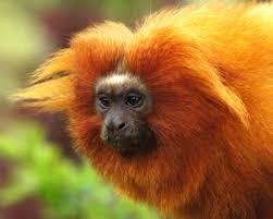 free monkey pics