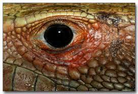 amazon rainforest animal