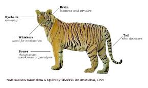 habitat of tigers