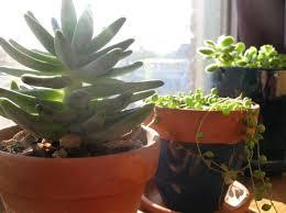 indoor potted plants