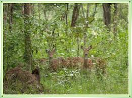aralam wildlife sanctuary