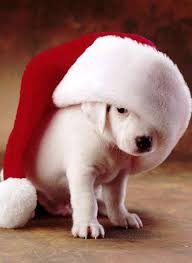 puppy christmas pictures