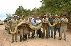giant anaconda pics