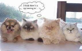 cute cats pics