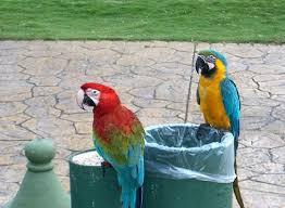 dominican republic birds