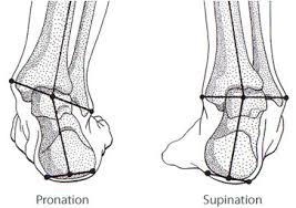 foot pronation supination