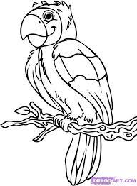 cartoon parrot pics