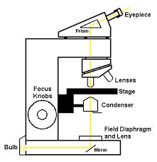 bright field light microscope