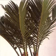 house plants palm