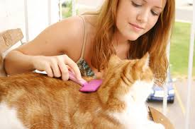 cat grooming brush